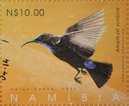 Amethyst sunbird