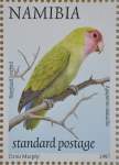 Rosy-faced lovebird