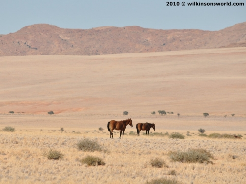 Wild horses - stunning backdrop