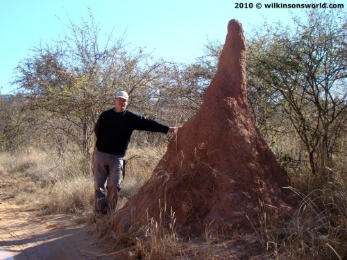 Rob dwarfed by a termite mound