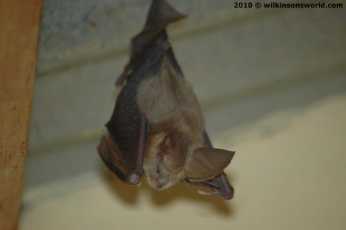 Bat in the bathroom