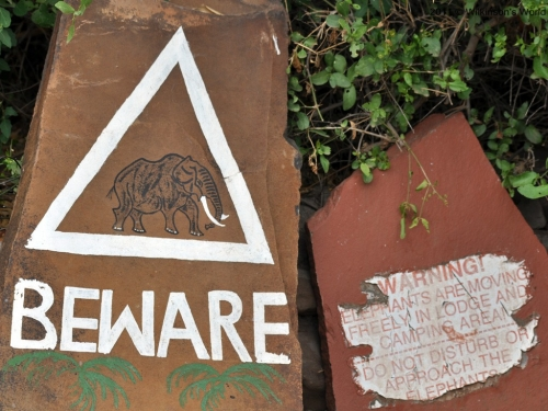 Beware of elephants!