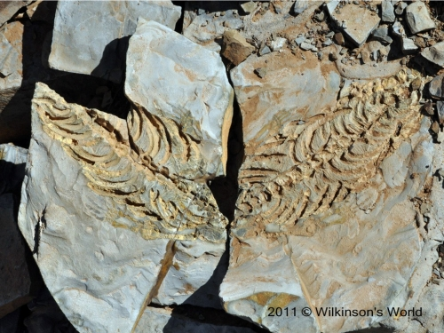 Mirror image of the fossil
