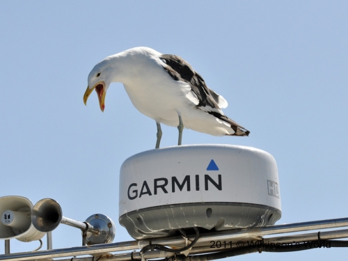 The new voice of Garmin!