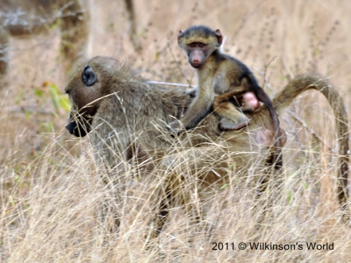 Mother carrying baby on her back