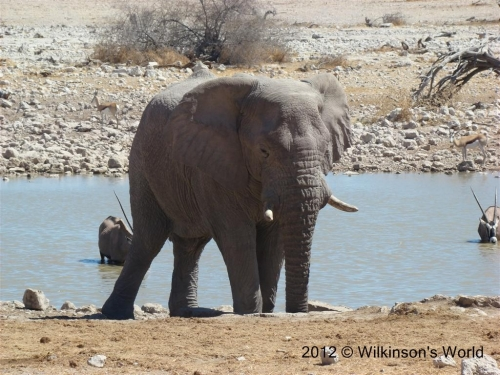 Close up at Etosha National Park