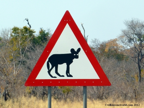 Look out for Wild Dogs