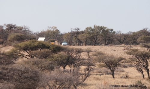 Campsite at Botsalano Game Reserve