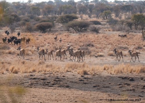 On the way down to the waterhole