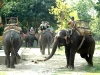 Tourists on elephants at the Royal Chitwan Park
