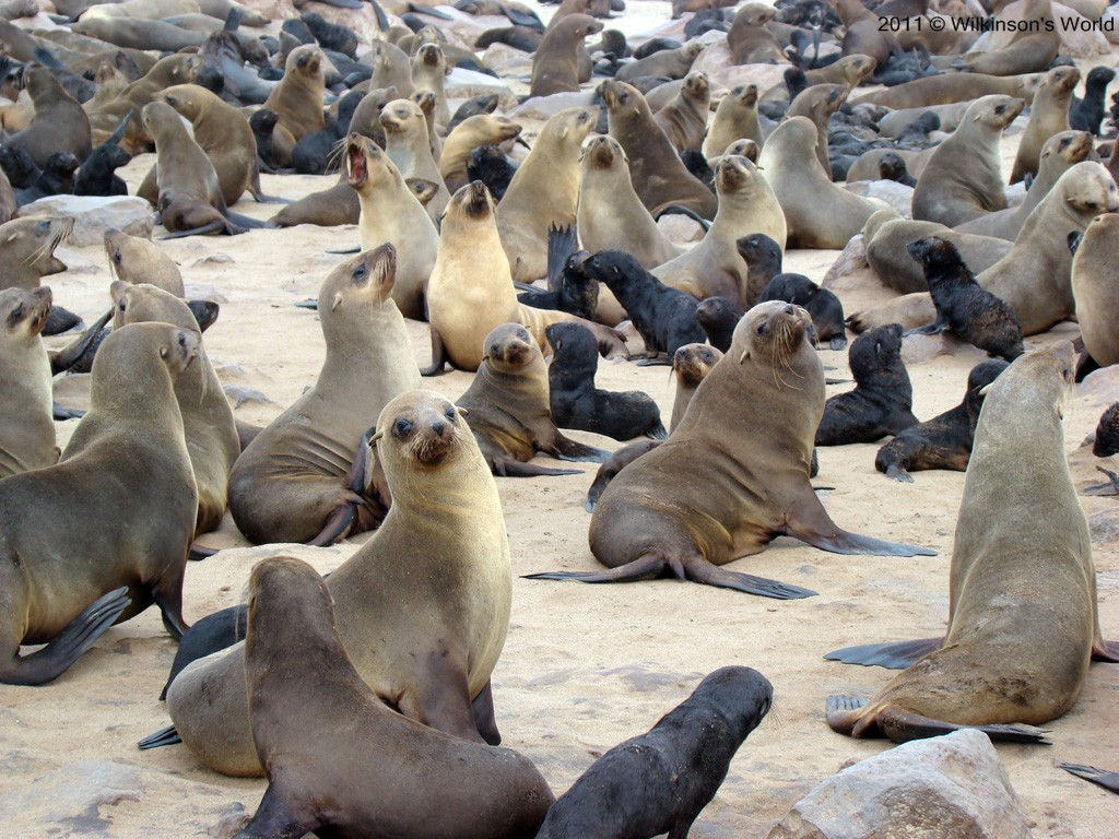 A Group Of Seals 110