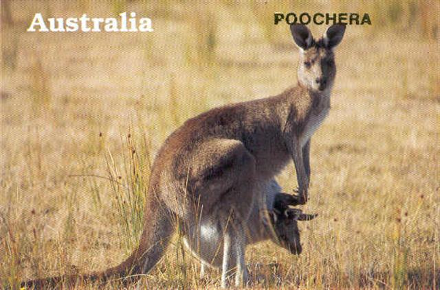 Poochera postcard