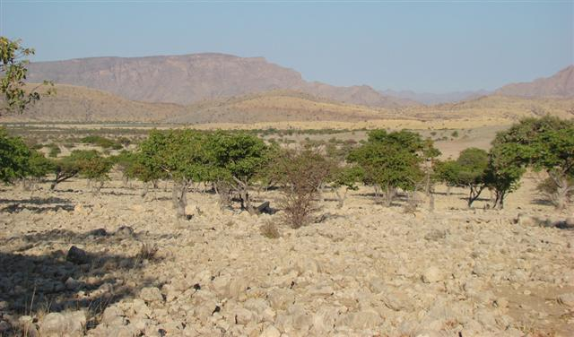 An arid and harsh environment