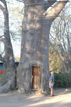 Toilet in the tree - Katimo Mulilo