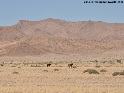 First sighting of a group of horses