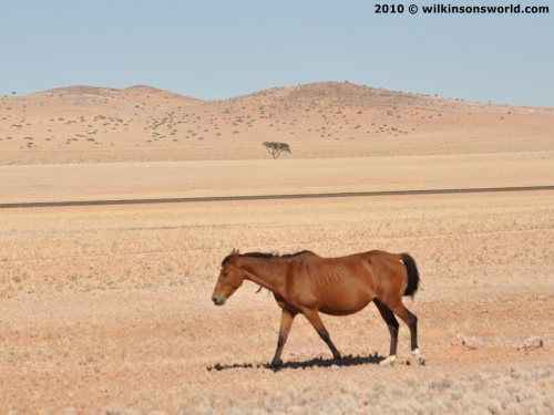 Feral horse close to the road