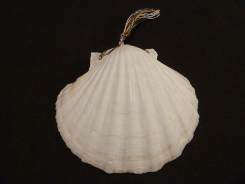 Shell - Symbol of the Camino