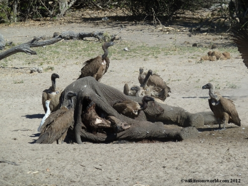 Breakfast time in Chobe
