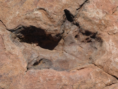 Dinosaur tracks at Otjihaenamaparero