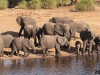 Elephants-on-the-banks-of-the-Chobe-River